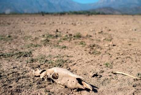 Desertificação está mudando a paisagem de vários países e pode causar o deslocamento de milhões de pessoas na próxima década