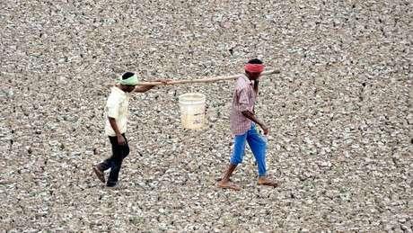 """Quase um terço da população global - 2,6 bilhões de pessoas - vive em países em situação de estresse hídrico """"extremamente alto""""."""