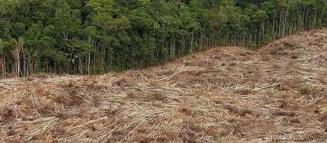 Em julho, 2.254,9 quilômetros quadrados de floresta foram devastados