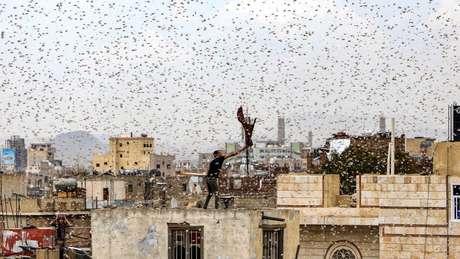 Saná, capital do Iêmen, foi invadida por gafanhotos em julho passado