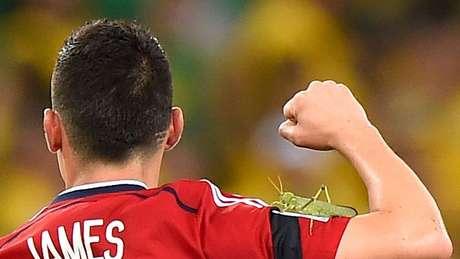 Gafanhotos até apareceram na Copa do Mundo de 2014