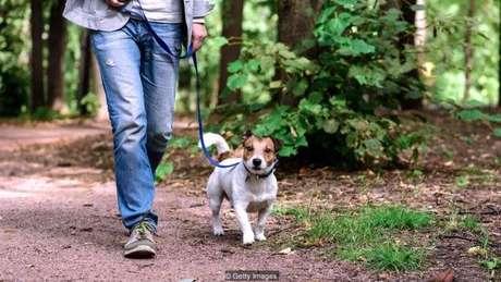Há um certo prazer em simplesmente andar sem ter que se preocupar com o efeito que isso tem na saúde