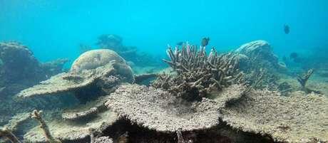 Em 2016, branqueamento atingiu parte da Grande Barreira de Corais