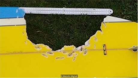 O tubarão que atacou Hannah Mighall mordeu sua prancha antes de permitir que ela voltasse à superfície