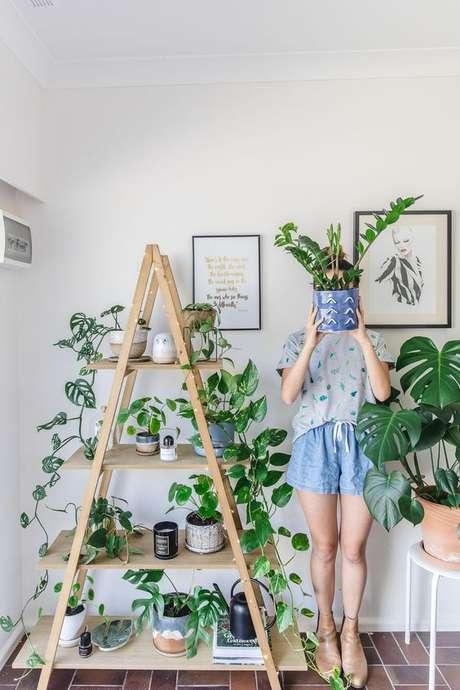 24. Um bom vaso de Costela de Adão chama a atenção até mesmo em um ambiente com muitas outras plantas. Foto: Kis Fot Kani