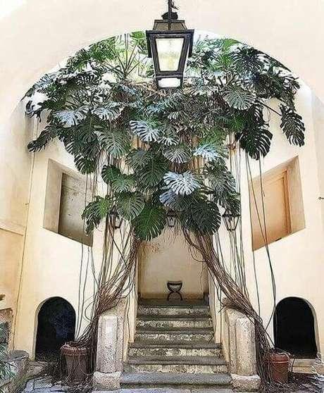 42. Este é um exemplo muito interessante de como a Costela de Adão pode ser utilizada em áreas externas.Foto: Pinterest