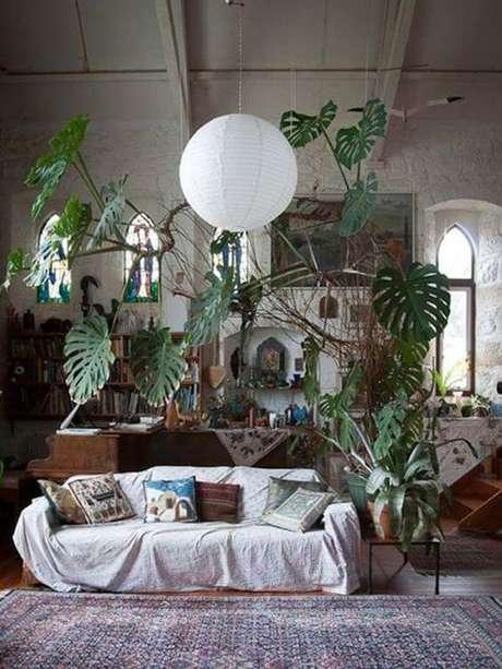 41. A Costela de Adão pode estar em todo o cômodo. Foto: Pflanzenfreunde