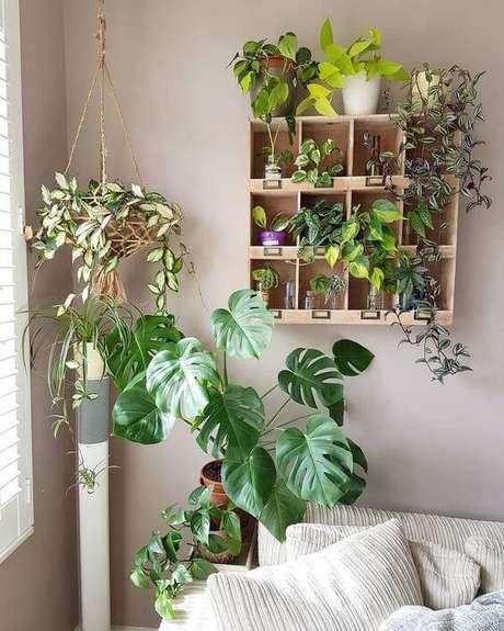 40. É interessante associar a Costela de Adão a outras plantas, mas de modo equilibrado. Foto: Yo Home