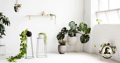 44. Usar um suporte para o vaso de Costela de Adão é interessante para casas modernas. Foto: A Senhora do Monte