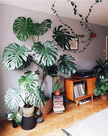 35. As folhas grandes da Costela de Adão ajudam a preencher o ambiente. Foto: Instagram