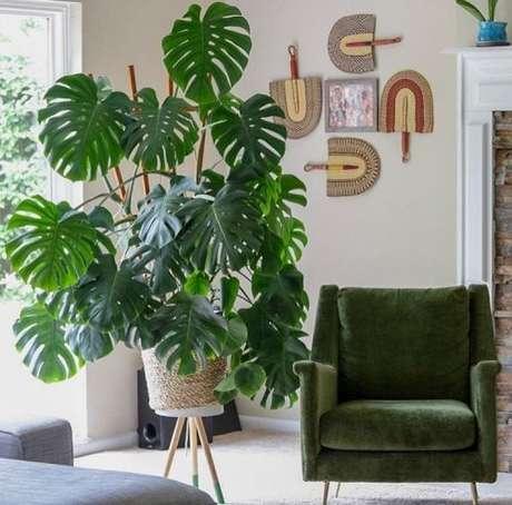 71. Mais um exemplo de como o cesto de palha combina com a Costela de Adão. Foto: That Planty Life