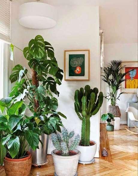 43. Outras plantas tropicais podem ser associadas à Costela de Adão para existir um equilíbrio. Foto: Simpli Chique