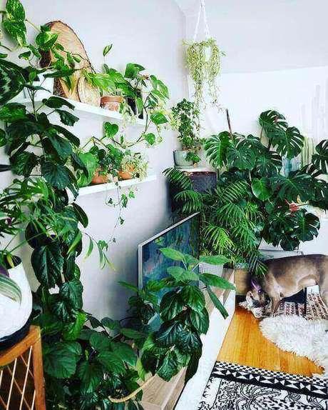 23. A Costela de Adão pode ser associada a outras plantas de muitas formas. Foto: Pinterest
