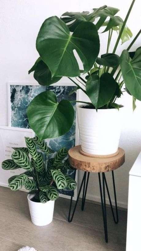 67. A Costela de Adão combina muito bem com outras plantas. Foto: Estilo Próprio By Sir