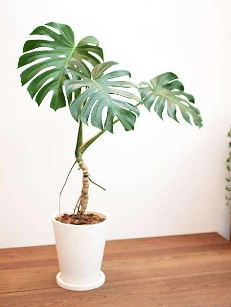 18. Até a Costela de Adão com poucas folhas chama a atenção no ambiente. Foto: Tree Tree