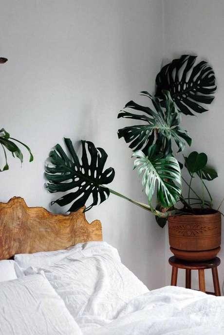 7. A Costela de Adão pode ser inserida em muitos cômodos. Foto: Pinterest