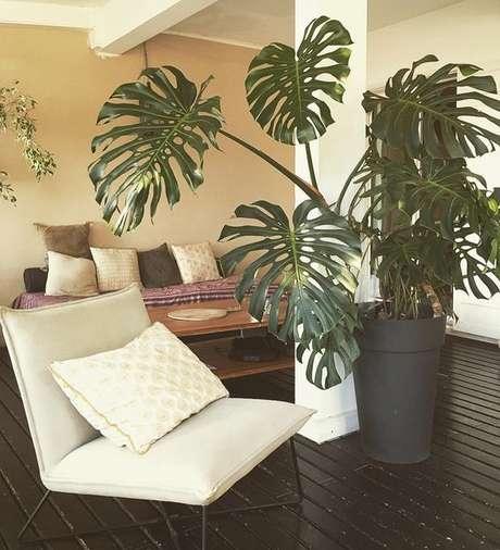 46. A Costela de Adão com folhas grandes é muito usada em ambientes externos. Foto: Dicas de Mulher