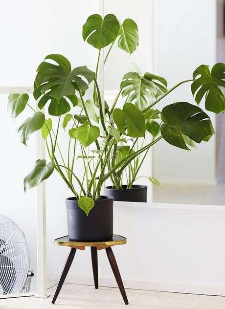 62. O vaso preto de barro é moderno e combina muito bem com a Costela de Adão. Foto: Frenchy Fancy