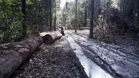 Resultado de estudo de universidade americana é o dobro do desmatamento registrado pelo Inpe no período