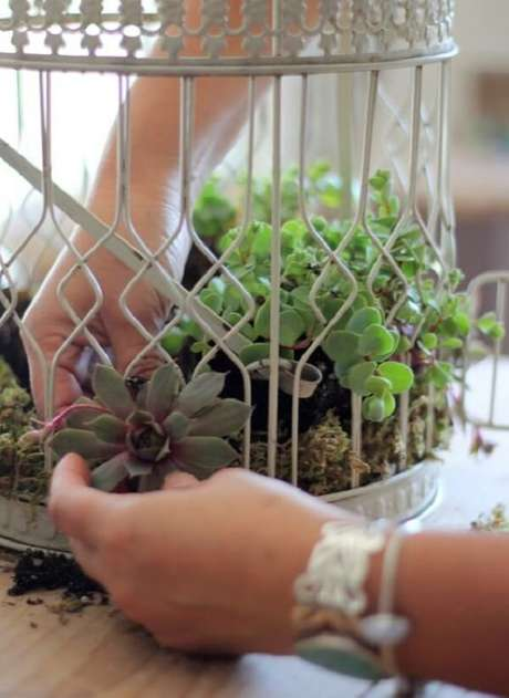 18. Gaiolas decorativas enfeitadas com suculentas. Fonte: Pinterest