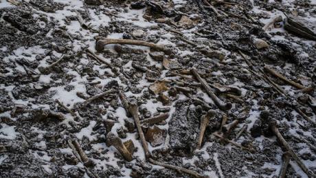 Os ossos de centenas de pessoas foram encontrados em 1942 por um guarda florestal