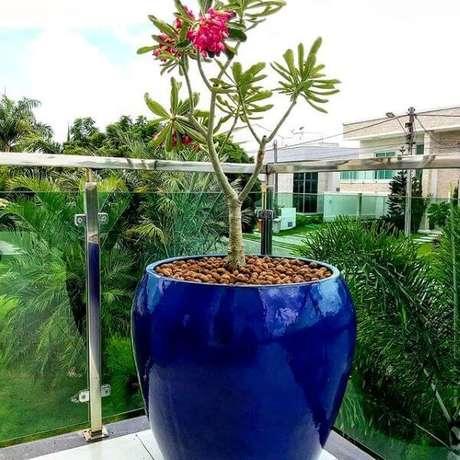 24. O vaso vietnamita pode ter flores de cores lindas – Por: Publicinsta