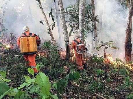 Houve um aumento de 84% nos focos de incêndios florestais em comparação com o ano passado