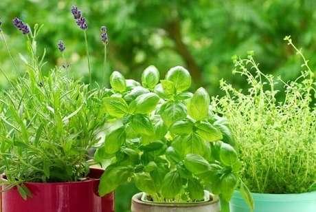 37. Horta em casa com ervas em vasos diferentes. Foto de Silver Magazine