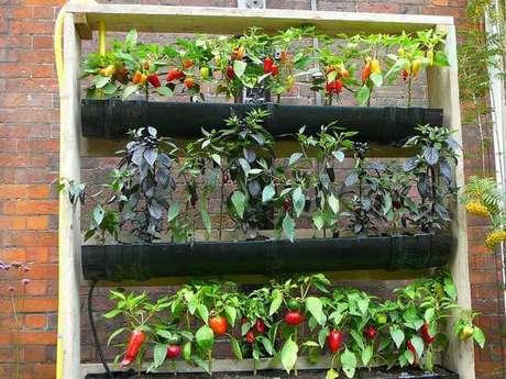 27. Horta caseira de pimentas. Foto de Pinterest