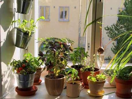 39. Horta em casa em vários vasinhos diferentes. Foto de Roofing Brooklyn