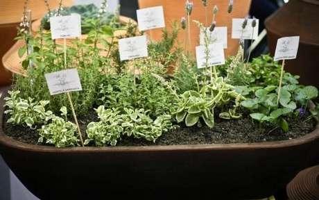 16. Você pode também fazer uma mini horta em casa, colocando várias plantas que combinem em um mesmo vaso. Projeto de MC3 Arquitetura