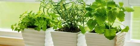 1. Vasos de plantas com temperos são perfeitos para fazer sua primeira horta em casa, para a decoração e para o uso no dia a dia