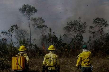 Brigadistas observam incêndio na mata de  Manicoré, Amazônas