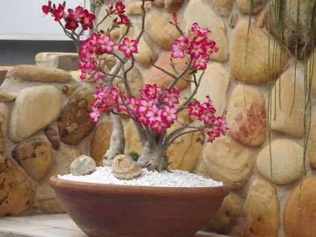 5. As rosas do deserto são plantas que não se adaptam bem a clima frio