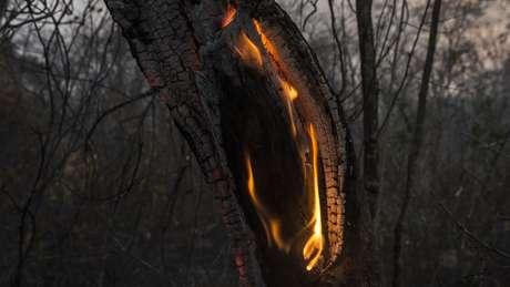 Chamas já destruíram centenas de milhares de hectares de uma floresta única no mundo