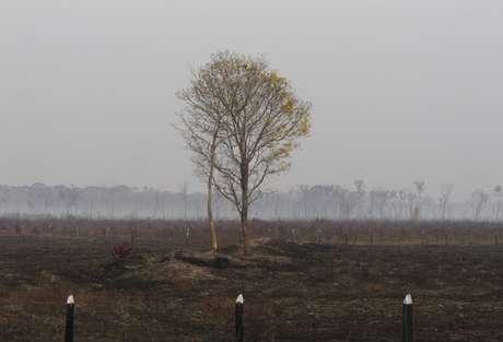 Vista de região afetada por incêndios na zona rural nas margens da BR-230.