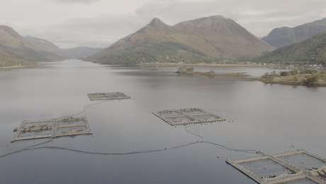 Fazendas de salmão na Escócia