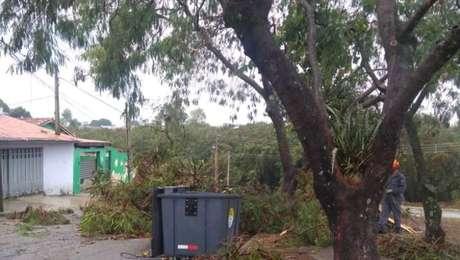 Queda de árvore em Sorocaba (SP)