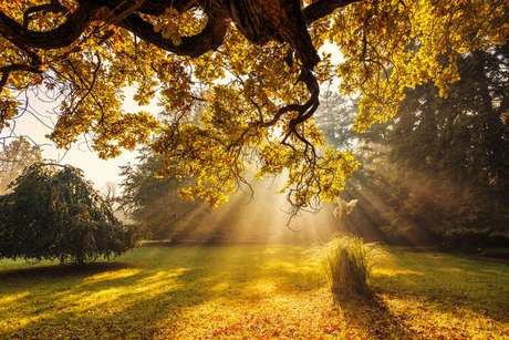 Feng Shui: setembro é mês de boas energias e muita vida