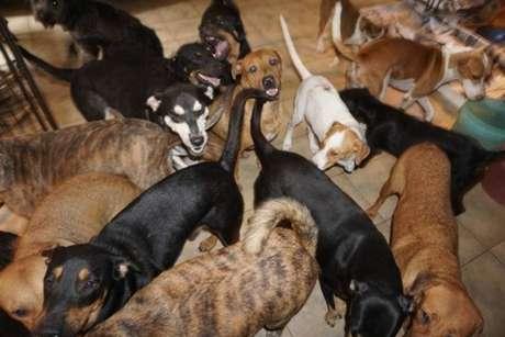 Mulher decidiu abrigar 97 cachorros na casa dela para protegê-los do furacão.