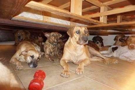 Cães que foram abrigados por Chelle Phillips por ameaça do furacão Dorian, nas Bahamas.