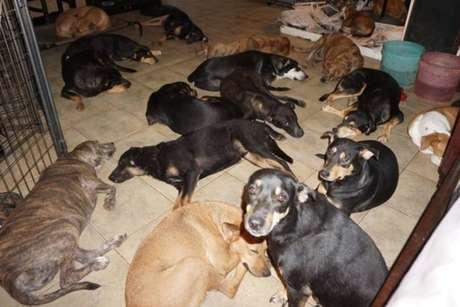 Acuados, porém protegidos, cachorrinhos dividem casa de mulher que decidiu salvá-los da ameaça do furacão Dorian.