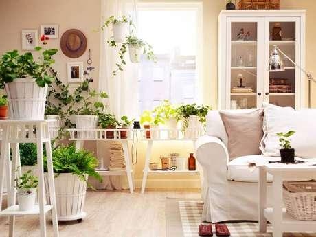 1. Vasospara plantas podem garantir um ambiente mais leve e bonito.