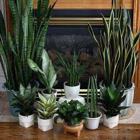 26. Modelos de vasos de planta pequenos