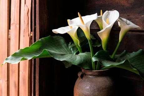 23. Escolha vasos que combinem com a decoração do seu copo de leite – Por: Pinterset