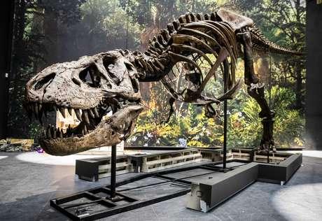 O tiranossauro parece ter estruturas similares às de jacarés em seu crânio
