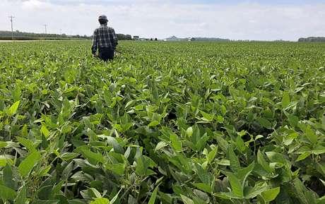 Analista checa plantio de soja em Allen County, Indiana (EUA)  19/08/2019 REUTERS/P.J. Huffstutter