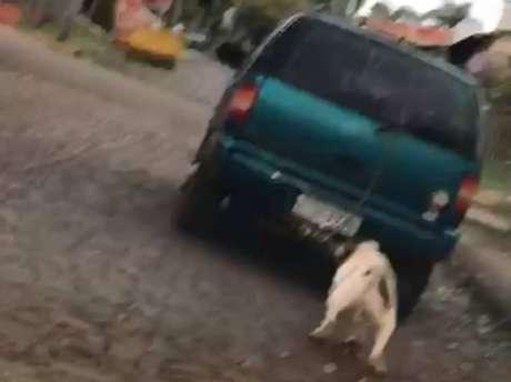 O registro do cachorro amarrado sendo arrastado por um carro foi feito por uma motorista em Ijuí, no Rio Grande do Sul