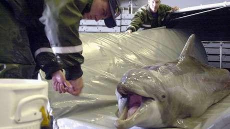 Recentemente, a Marinha dos EUA usou golfinhos em operações de remoção de minas