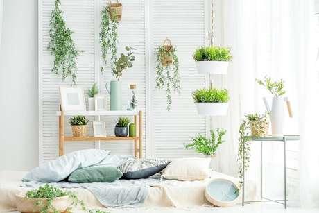 17. Decoração clean para ambiente com vários vasos de plantas – Foto: Habitissimo